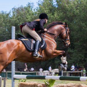 categorie paardrijden
